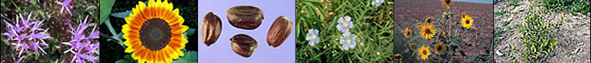 Image banner: montain monardella, sunflower, jojoba beans, Lewis flax, sunflower plants, and jojoba plant.