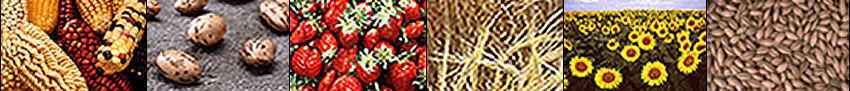 Images of corn, beans, strawberries, grasses, sunflowers, and grain.