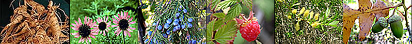 Image banner: ginseng roots, echinacea flowers, juniper berries, raspberry, shining willow, and Gamble oak acorn.