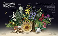 Celebrating Wildflowers Ethnobotany poster.
