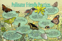 Thumbnail of Pollinator Friendly Practices interpretive panel.