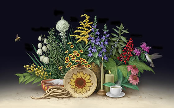The Celebrating Wildflowers Ethnobotany poster displaying various plants and their products.