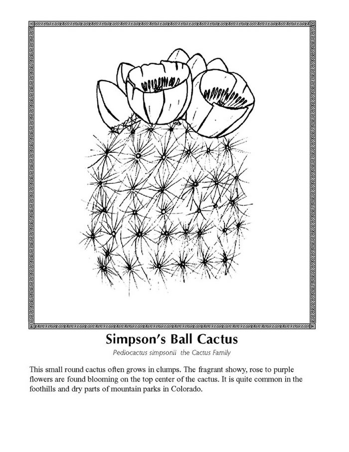 Cactus Coloring Pages. 417 best floral coloring pages for adults ...