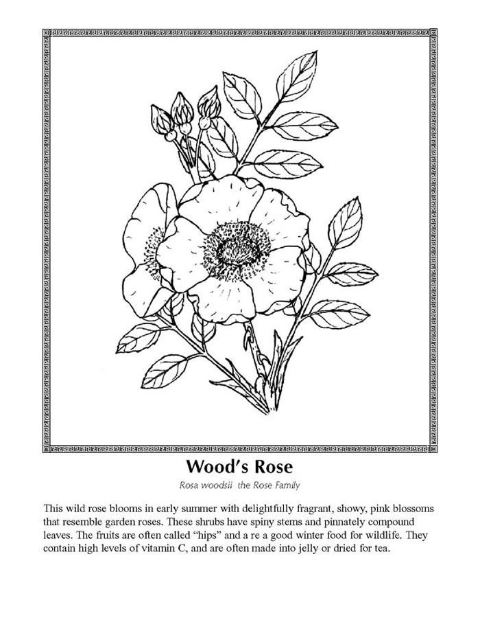 Celebrating Wildflowers Coloring Page