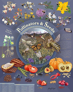 Pollinators and Seeds poster.