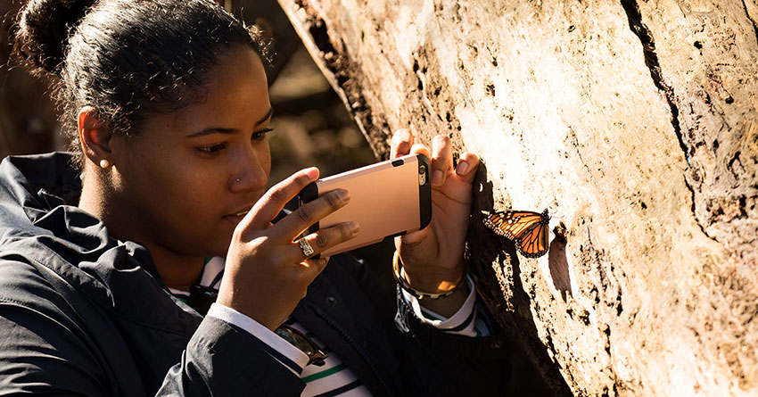A young woman taking a picture of a monarch butterfly with her smartphone.