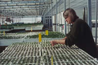 Nancy Shaw working in a greenhouse.