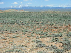 Sagebrush shrubland habitat for bitterroot in Wyoming.