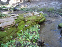 typical rotten log lying on a streambank.