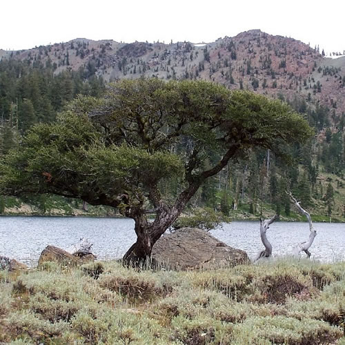 A scenic view of mountain mahogany by a riverside.