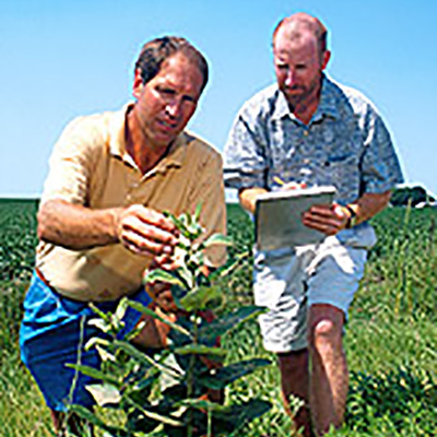 Picture of two researchers inspecting a milkweed plant.