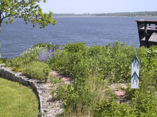 Picture of a butterfly garden along a shoreline.