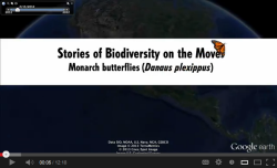 Title scene of the YouTube Video, Stories of Biodiversity on the Move, Monarch Butterflies (Danaus plexippus)