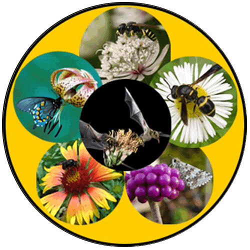 Pictures arranged in a wheel of a variety of animals, insects and bats, shown pollinating flowers.