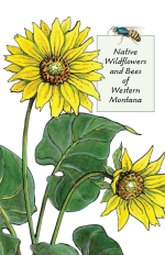 Cover page of Native Wildflowers and Bees of Western Montana.