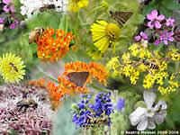 A collage of bees and butterflies on flowers.