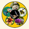 A series of images arranged as a wheel showing various animal pollinators.