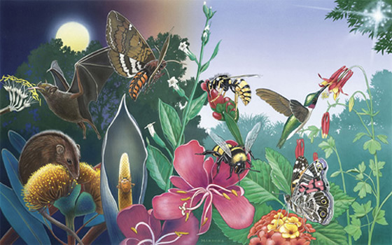 A night and day scene displaying various pollinators and their plant interactions.