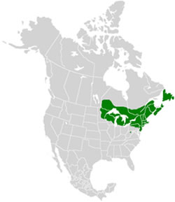 Range of the Bog Copper.