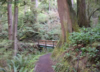 The Giant Spruce Trail passing through a forest of Sitka spruce, western hemlock, Douglas fir, and western red cedar