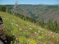 wildlflowers viewed from the Hells Canyon Overlook.