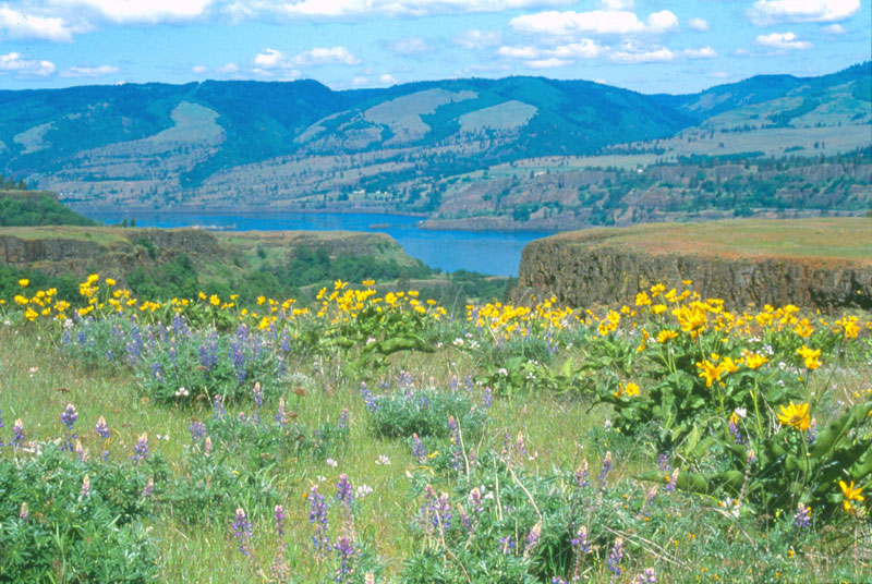 View from the Rowena Overlook over the Columbia River Gorge.