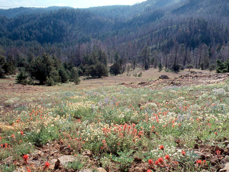 Indian Paintbrush and other wildflowers at Dixie Butte.
