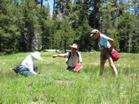 A man and two women looking at flowers in a Champion Lodgepole Pine meadow.