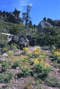 the geologic features resembling gargoyles guard over beautiful wildflower displays.