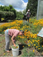 Volunteers  tend the display garden.