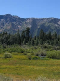 View across Taylor Marsh to Mt. Tallac.