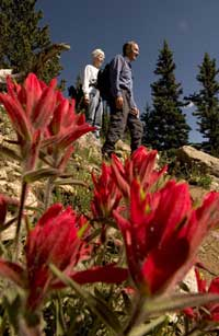 Beautiful paintbrush (Castilleja sp.) greets hikers on Dos Chappell Trail near Mt. Goliath, Arapaho National Forest, Colorado.