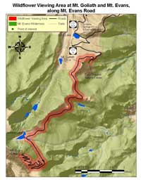 Map of a portion of the Arapaho National Forest displaying the Mt. Goliath and Mt. Evans Wildflower Viewing Area along the Mt. Evans Road.