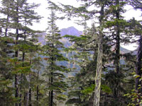 Montane forest along the higher elevations of Harbor Mountain road, with the peak of Harbor Mountain in the background. Common trees in this forest include mountain hemlock and Sitka spruce.