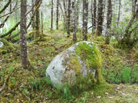 Moss grows on a boulder.