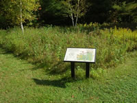 Small wildflower meadow with interpretive panel.