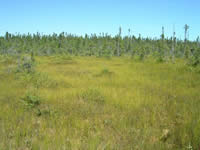 View of Fall River Patterned Fen from  the ground.