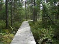 Imp Lake trail boardwalk.