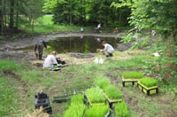 Planting the Ottawa Visitor Center rain/wetland garden.