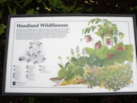 Woodland wildflower interpretive sign.