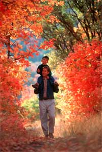 man wth a young boy on his shoulders walking along the Nebo Loop enjoying the Fall colors.