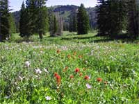 meadow at Tony Grove.