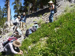 Nevada Native Plant Society members looking for Botrychiums at Three Springs.