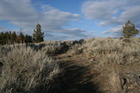 Big mountain sagebrush.