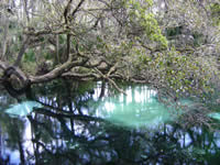 View of clear blue waters of Juniper Springs.