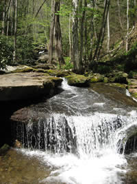 Cascades and moss covered rocks on Ledbetter Creek.