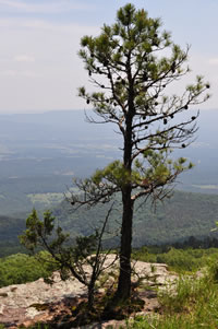 View of the Ozark National Forest from Mount Magazine.