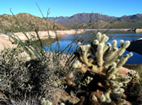 A trio of interesting desert plants with Bartlett Reservoir in the background.