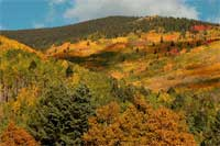 A view of aspens in their golden fall colors along the highway from Santa Fe.