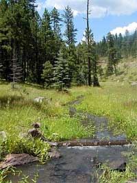 small streams draining the rolling sub-alpine grasslands on the way to Big Lake.